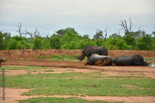 Fotobehang Neushoorn Nashorn