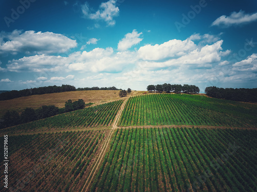 Fotobehang Wijngaard Aerial view over vineyard in Europe