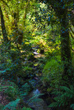 Small river falling through green forest full of vegetation. Pure nature