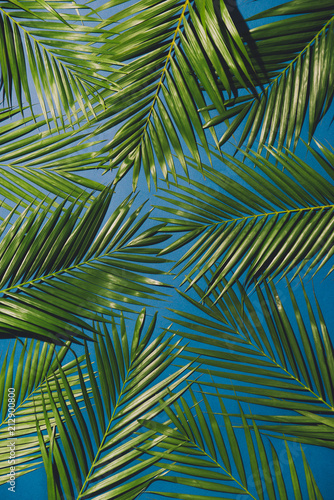 tropical palm foliage, greenery background, summer concept
