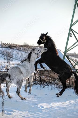 Fotobehang Paarden Konie