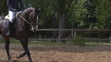 a thoroughbred stallion runs across the field. a horseman rides a horse in the rider's riding. sunny day. slow-motion HD - 212910456