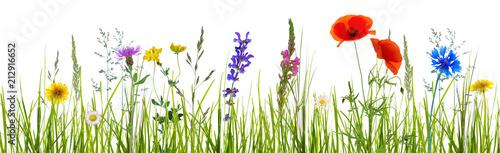 banner na białym tle kwiat łąka