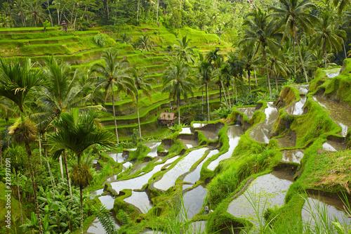 Aluminium Pistache Rice terrace