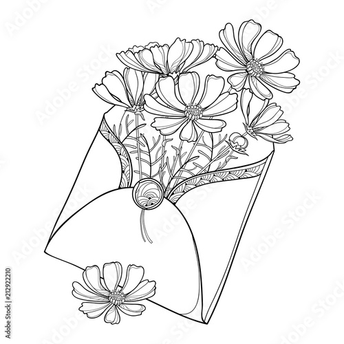 Vector bouquet with outline Cosmos or Cosmea flower bunch, ornate leaf and bud in open craft envelope isolated on white background. Contour blooming Cosmos plant for summer design and coloring book. - 212922210