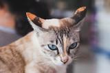 close up  cat's eye - 212922874