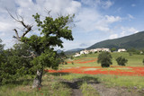 field full of red poppies and other flowers near old village on hill in french provence under blue sky in summer - 212929818