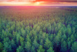 Aerial drone view of pine forest, rural landscape with cloudy sky at sunset - 212932601