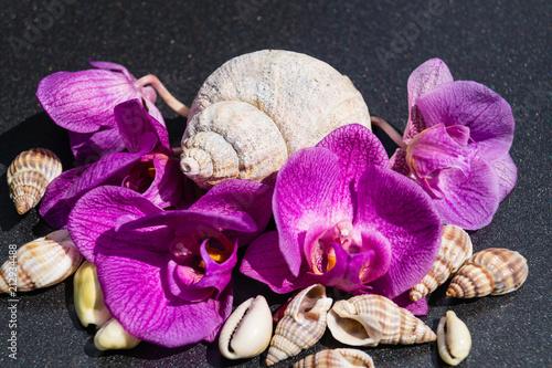 Ochideenblüten und Muscheln