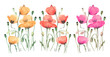 Pink, orange and red poppies on a white background, in a watercolor style.