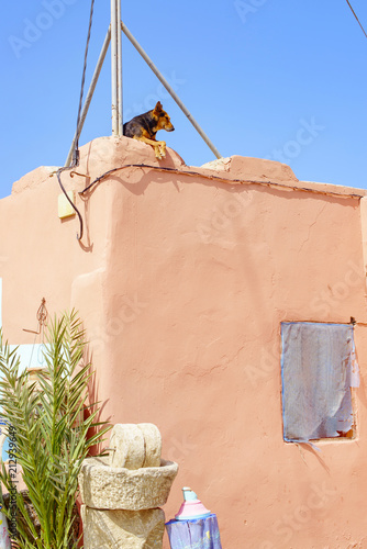 Canvas Marokko dog on the roof of a building in Marrakech