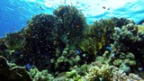 Reef and beautiful fish. Underwater life in the ocean. Tropical fish.  - 212945451