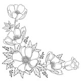 Vector hand drawing corner bouquet with outline Anemone flower or Windflower, bud and leaf in black isolated on white background. Ornate contour Anemone for spring or summer design or coloring book. - 212946020