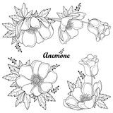 Vector set of hand drawing outline Anemone flower or Windflower, bud and leaf in black isolated on white background. Ornate contour Anemones for spring or summer design or coloring book. - 212946061