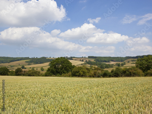 Foto Murales Wolds agricultural landscape