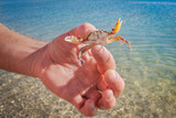 Live crab in the hand of a man on the background of the sea - 212955617