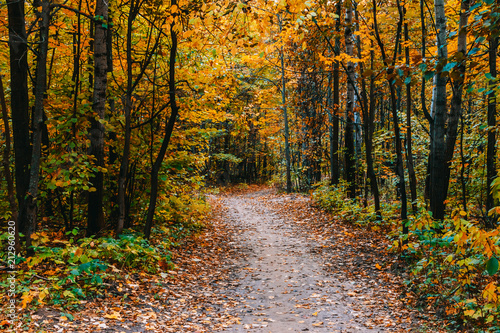 Plexiglas Herfst Path in a forest with colorful autumn leaves