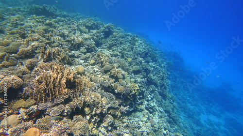 Rafa koralowa - 212960836