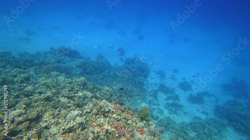 Foto Murales Rafa koralowa