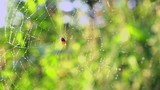 4k Spider on the Web In The Woods - 212967638