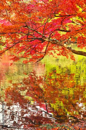 Plexiglas Rood 紅葉と池