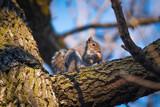 Squirrel In WInter - 212989283