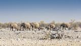 Elefantenherde, Namibia