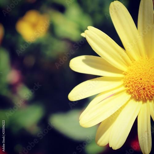 Poster Summer bloom