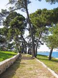 Fototapeta  - Ścieżka między drzewami © karolinaklink