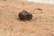 Single dark brown lava stone on bright ground