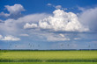 Green wheat field with white clouds
