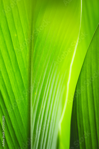 abstract Green leaf closeup background - 213032802
