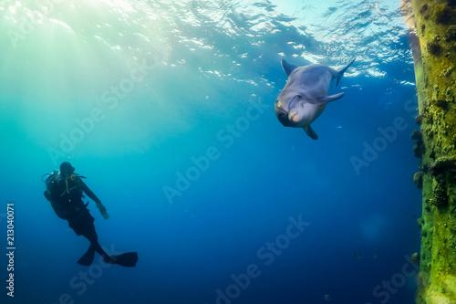 Foto Spatwand Dolfijn Red sea dolphin
