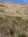 Dunes. Coast Netherlands. Julianadorp. - 213052071