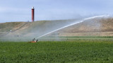 Spraying water on the fields behind the dunes of Julianadorp. Agriculture. Irrigation.  - 213052090