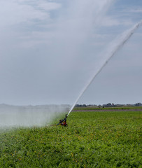 Spraying water on the fields behind the dunes of Julianadorp. Agriculture. Irrigation.