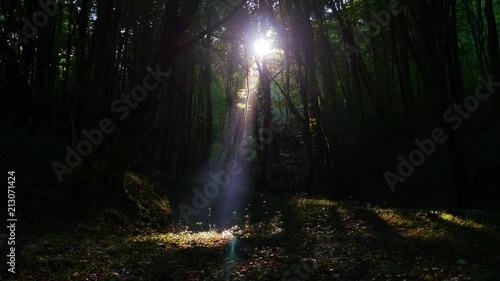 Ray of sunshine in a dense forest