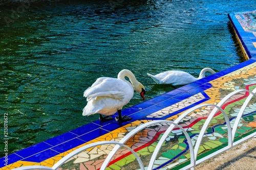 Fotobehang Zwaan Swans at Oeste Park