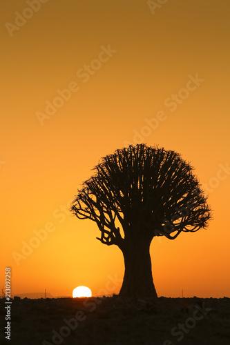 Foto Spatwand Baobab Sunset Baobab Tree
