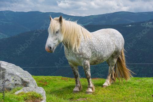 Fotobehang Paarden white horse in the alps
