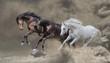 Leinwanddruck Bild - Bay, black and white horses runs in the dust storm