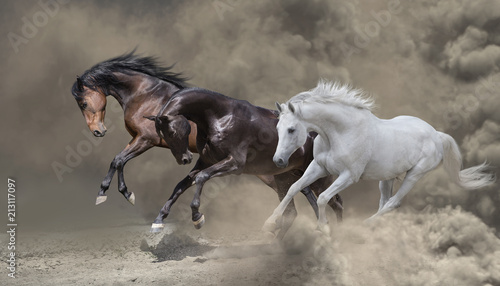 Bay, black and white horses runs in the dust storm