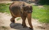 elephant with back legs crossed