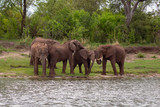 Five Elephants by the river