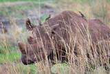 Rhino - 213132676