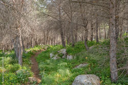 Sicilian Summer Landscape near Cefalù - 213133408