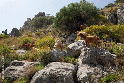 Poster Sicilian Summer Landscape near Cefalù
