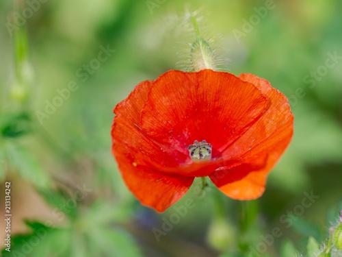 sizilianisches Blumenmakro