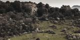 sizilianische Hügellandschaft im Frühjahr - 213135088