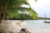 Shore with lush palm trees along the beach of Bocas del Toro, Panama - 213137462